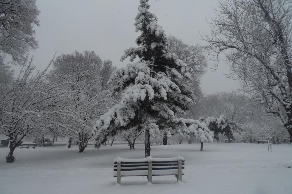 Winter at Mosholu Parkway February 2014