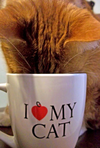 No Cat Cafe in NYC? That's fine, I'll just have one in my house.