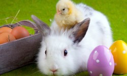 Seriously Guys, Baby Rabbits and Chickens Are Not Appropriate as Easter Gifts