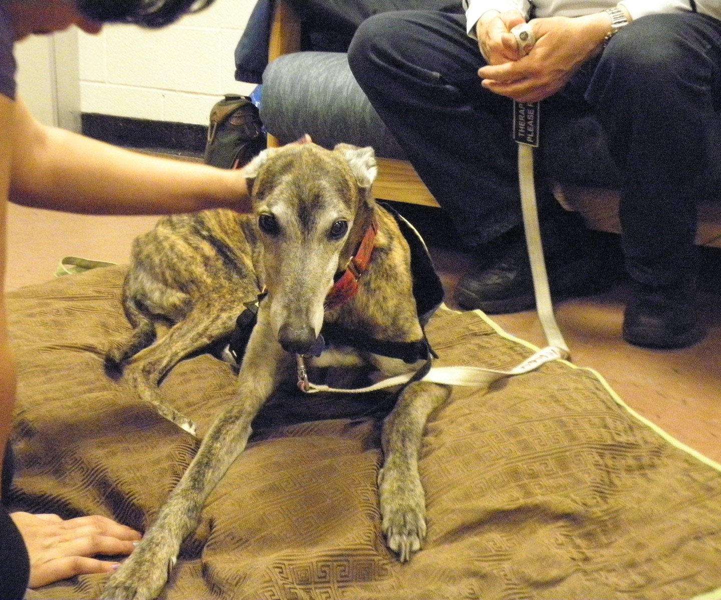 Therapy dogs come to Lehman College