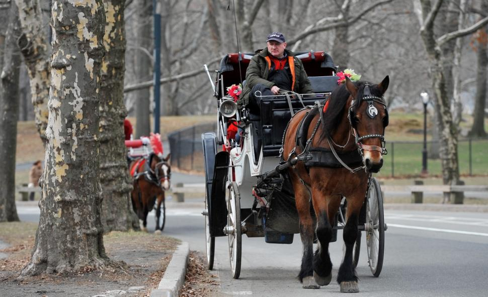 NYC Horse Carriage Driver Accused of Switching Horses