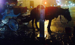 I applaud Mayor de Blasio's courageous Horse Drawn Carriage Legislation