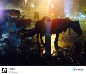 July 3 2014 Carriage Horse