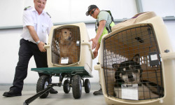 Federal Regulations Make Flying with Pets Safer