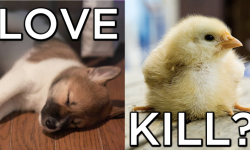 Why Love a Puppy but Kill a Chick? – From the Desk of Lewis H. Goldstein
