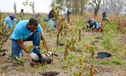 Help Plant Trees in Soundview Park