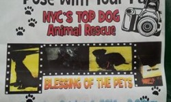 NYC's Top Dog Fundraiser