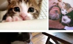 "Introducing ""Bronx Pets"" – Allie"