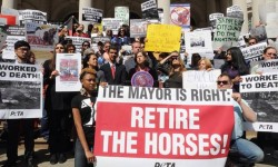 NYCLASS Rally to Support Mayor's Plan to Ban Horse Carriages