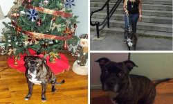 Bronx Pets – Hennessy