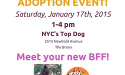 Please Adopt Your Next BFF – Best Furry Friend – 1/17/15