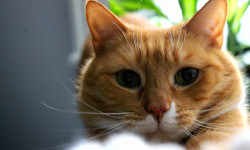 Cat Declawing May Be Banned in New York State