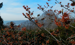 Wave Hill Events Jan 30–Feb 6