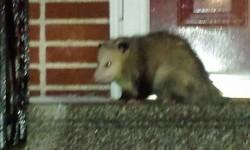 Wildlife of the Bronx :)
