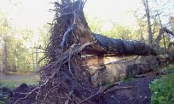 Council Member Andy King Passes Storm Damaged Trees Legislation