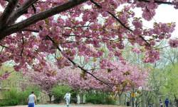 April Calendar for Poe Park Visitor Center