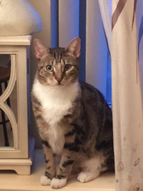 Milan -- Bronx Pet