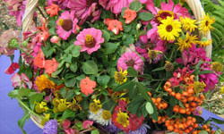 Botanical Garden August Events: Bronx Green-Up and the NYC Compost Project