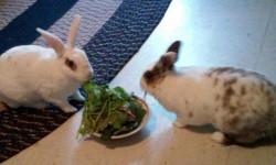Bronx Pets – Felix & Oscar