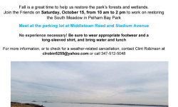 Volunteer with the Friends of Pelham Bay Park – October 15th