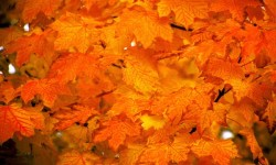 NYC Department of Sanitation Announces Autumn Leaf Collection Schedule