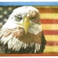 american-bald-eagle_flag-motif