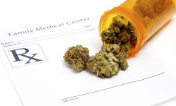 Medical Cannabis Arrives in the Bronx