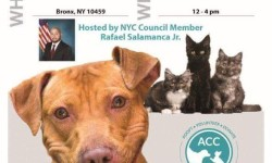 Pet Adoption Event, 11/5