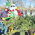 mulchfest-in-nyc-recycling-christmas-trees-537x362