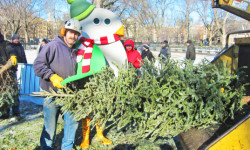 """""""Tree-cycling"""" Your Christmas Tree in NYC; Options include Curbside Collection and MulchFest"""