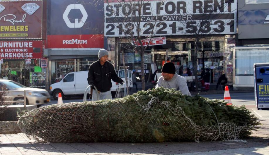 he Fordham Road BID gets a 15-foot spruce delivered from an upstate farm. Photo by David Greene