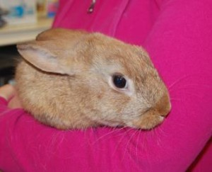 Bangle- adoptable bunny from Sean Casey Animal Rescue (http://nyanimalrescue.org/)