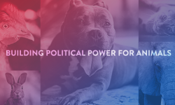 Power to the Paw: Official Launch of Empire State Humane Voters