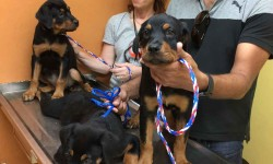 53 Dogs Rescued from Puerto Rico Arrive in NYC and are Available for Adoption