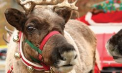 USDA Issues Permit for Santa's Reindeer