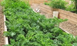 February Events: Bronx Green-Up and the NYC Compost Project