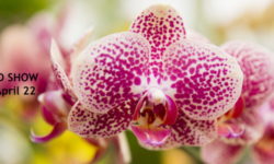 THE NYBG ORCHID SHOW 2018