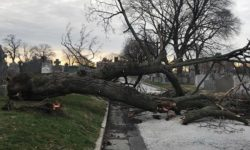 Leave Storm-Related Tree Work to Professionals