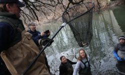 Helping the river run silver again