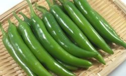 APHIS Proposes to Amend Import Regulations for Peppers from the Republic of Korea