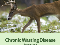 APHIS Revises Chronic Wasting Disease Program Standards