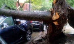 At least one automobile is now a convertible after a fallen tree crushed the vehicle along Van Cortlandt Park South.--Photo by Stacey Busch