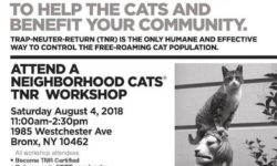 Neighborhood Cats TNR Workshop – August 4