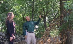 Identify Hazardous Trees Before Peak Hurricane Season
