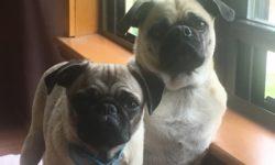 Bronx Pets: Tahni & Nadia