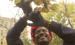 BRONX GREEN-UP AND NYC COMPOST PROJECT ANNUAL AWARDS CEREMONY & CERTIFICATE SERIES IN PRUNING