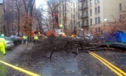 Worker's work to clear Sedgwick Avenue after a large tree came down during a heavy rainstorm.--Photo by Steve Bobkner