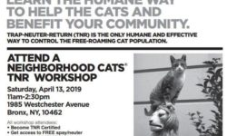 Bronx TNR Workshop Saturday April 13