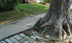 Tree Work Hub (NYC Parks)