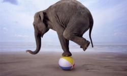Finding Balance in America